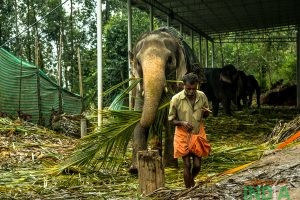LIFE OF A MAHOUT